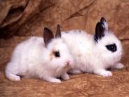 rabbit_wallpaper_24