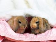 rabbit_wallpaper_25