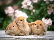 rabbit_wallpaper_27