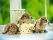 rabbit_wallpaper_28