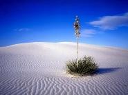 desert_wallpaper_01