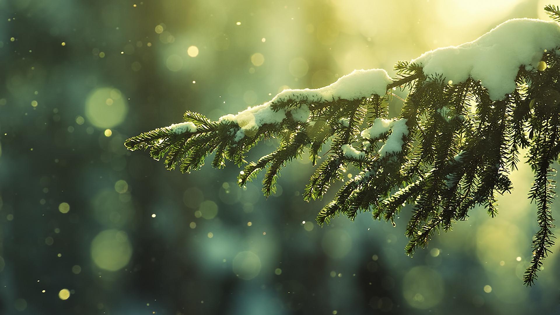 teli_winter_hatterkepek_108