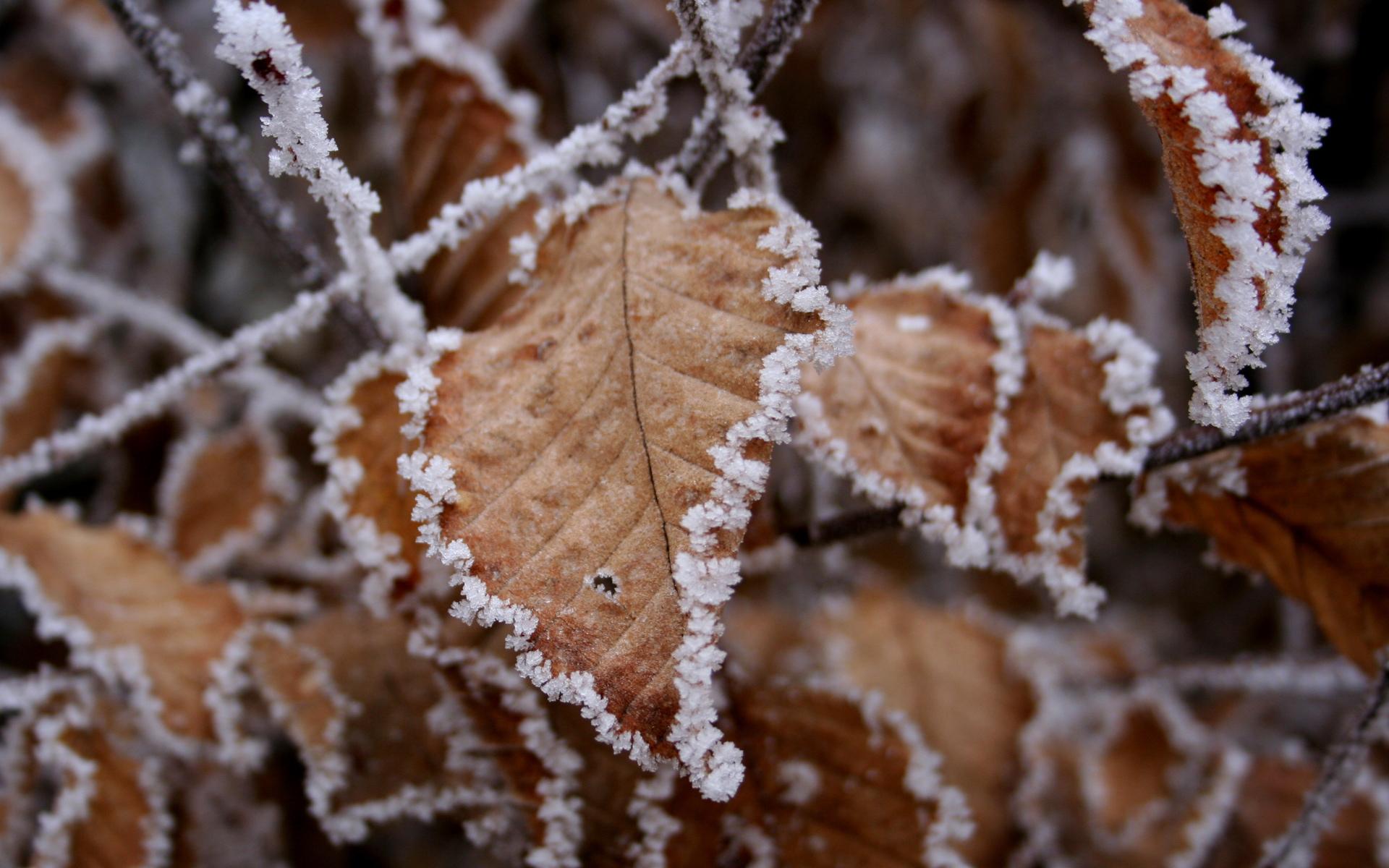 teli_winter_hatterkepek_110