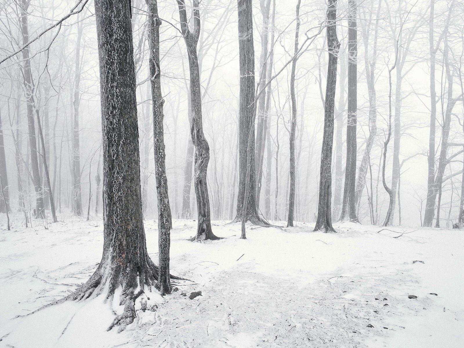 teli_winter_hatterkepek_122