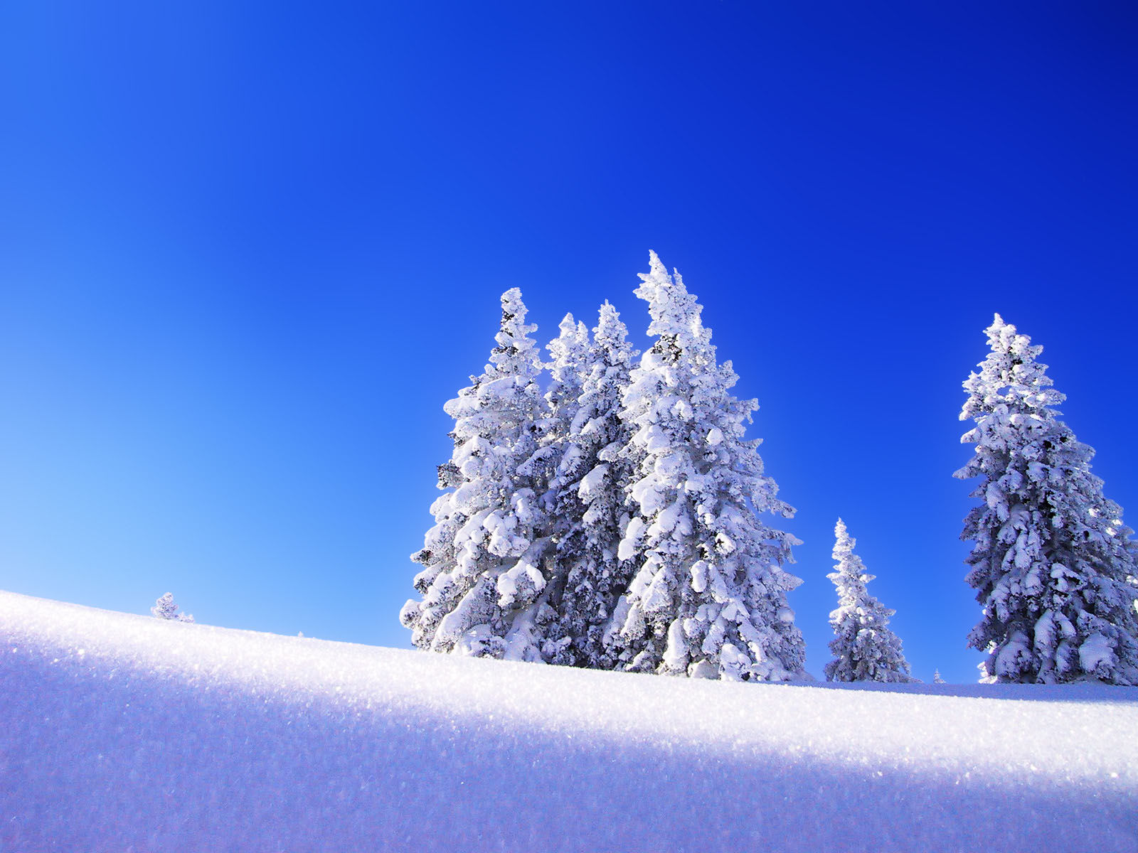 teli_winter_hatterkepek_30