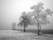 teli_winter_hatterkepek_26