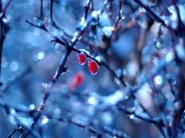teli_winter_hatterkepek_29
