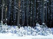 teli_winter_hatterkepek_62