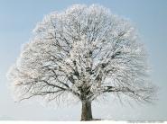 teli_winter_hatterkepek_63
