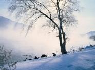teli_winter_hatterkepek_82