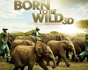 born_to_be_wild_wallpaper_01