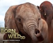 born_to_be_wild_wallpaper_02