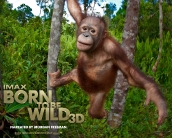 born_to_be_wild_wallpaper_03