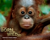 born_to_be_wild_wallpaper_05