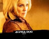 alpha_dog_wallpaper_13