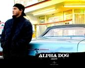 alpha_dog_wallpaper_2