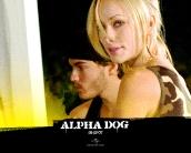 alpha_dog_wallpaper_4
