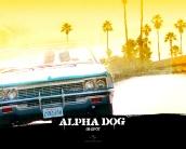 alpha_dog_wallpaper_6