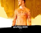 alpha_dog_wallpaper_7