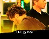 alpha_dog_wallpaper_8