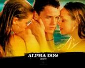 alpha_dog_wallpaper_9