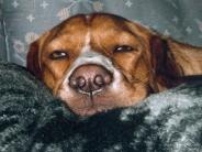 dog_wallpaper_115