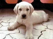 dog_wallpaper_117