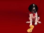 dog_wallpaper_193