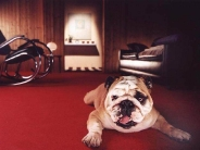 dog_wallpaper_194