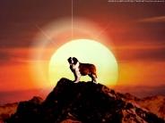 dog_wallpaper_196
