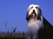 dog_wallpaper_203