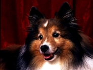 dog_wallpaper_206