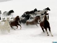 horse_wallpaper_101