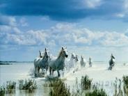 horse_wallpaper_126