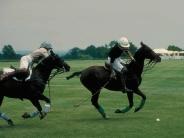 horse_wallpaper_177