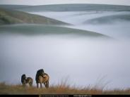 horse_wallpaper_179