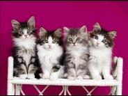 cat_wallpaper_106