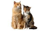 cat_wallpaper_107