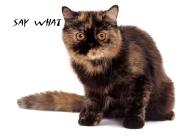 cat_wallpaper_11