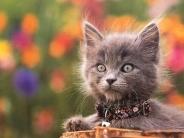 cat_wallpaper_110
