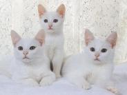 cat_wallpaper_111