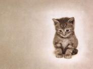 cat_wallpaper_113