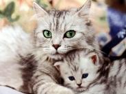 cat_wallpaper_114