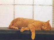 cat_wallpaper_115