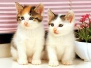 cat_wallpaper_12