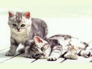 cat_wallpaper_121