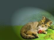cat_wallpaper_123