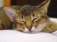 cat_wallpaper_124