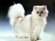cat_wallpaper_125