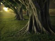 HiveTrees
